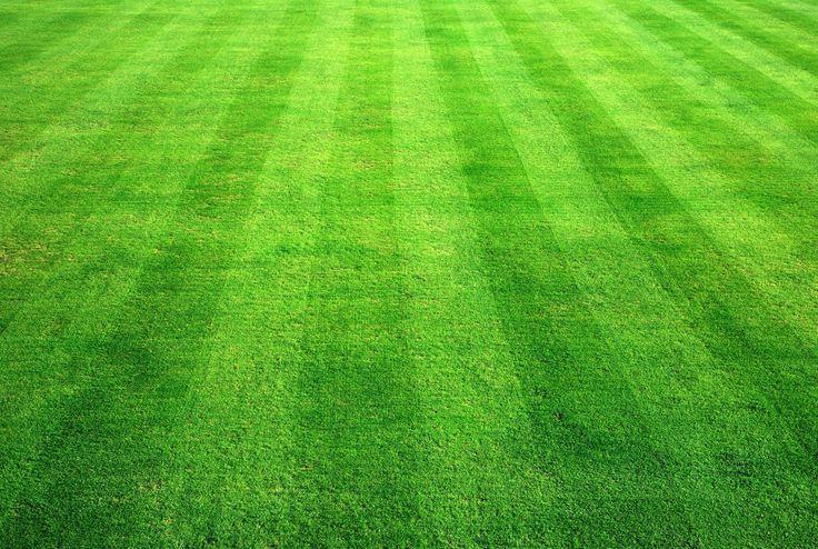 trawnik wegrzce wielkie